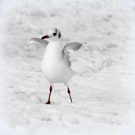 in de sneeuw!!