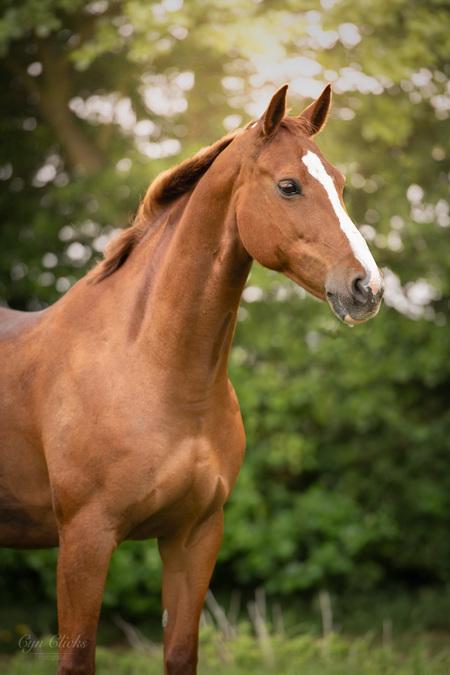 The Gracefull Lady - - - foto door iCyn op 11-06-2020 - deze foto bevat: paard, bokeh, kwpn, natuurlijk licht