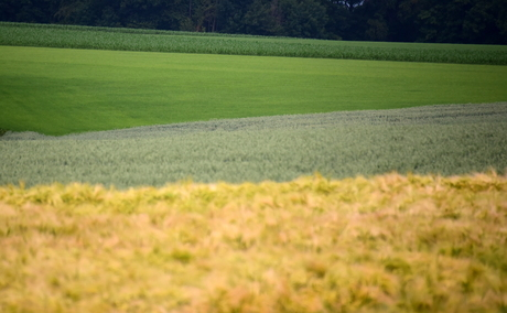 Landschap met diverse gewassen