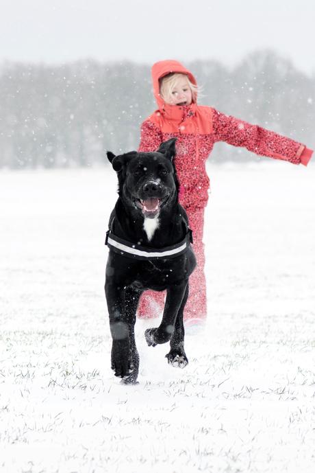 gekke hond in de sneeuw.