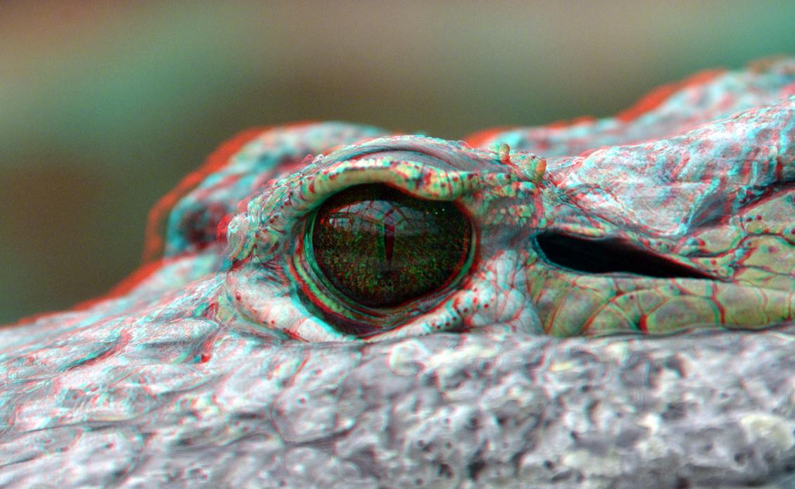 EYE Alligator Blijdorp Zoo Rotterdam 3D anaglyph - EYE Alligator Blijdorp Zoo Rotterdam 3D anaglyph - foto door hoppenbrouwers op 17-06-2020 - deze foto bevat: rotterdam, eye, 3d, zoo, blijdorp, alligator, anaglyph, stereo, d7000, blijdorp zoo, red/cyan, cha-cha, eye alligator