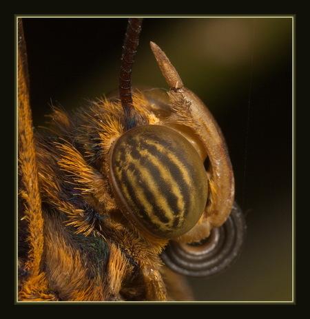 vlinderoog - van heel dichtbij :-) handheld gemaakt - foto door jeandeboo op 12-01-2013
