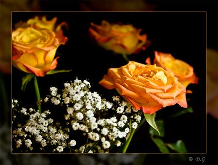 Brand new - De titel vanwege de aanschaf van mijn eerste spiegelreflex! Ik ben er heel blij mee, maar moet er tegelijkertijd flink aan wennen en leren ermee te w - foto door daniel44 op 13-08-2008 - deze foto bevat: kleur, natuur, rozen, bloemen, daniel44