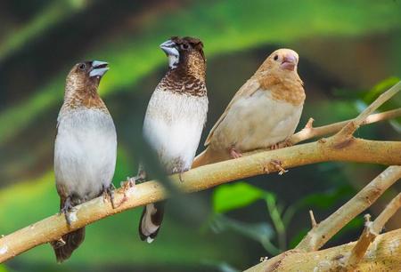 Three in a row - Het zijn watervlugge kleine vogeltjes maar hier lukte het er om in een klein momentje 3 samen op een tak te fotograferen. - foto door PhotoMad op 07-03-2019