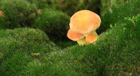 Setje paddenstoelen