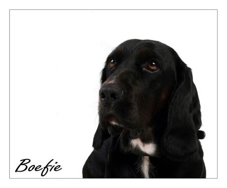 boefie