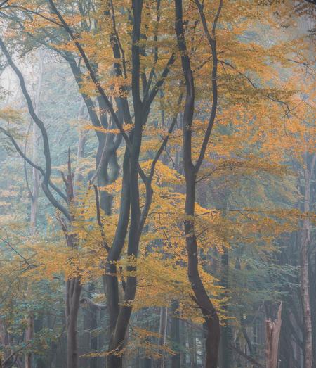 Autumn scene - - - foto door renevierhuis op 26-11-2020 - deze foto bevat: boom, natuur, licht, herfst, landschap, mist, bos, nederland