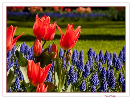 Bloemen uit Holland