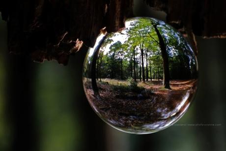 het bos in de bol