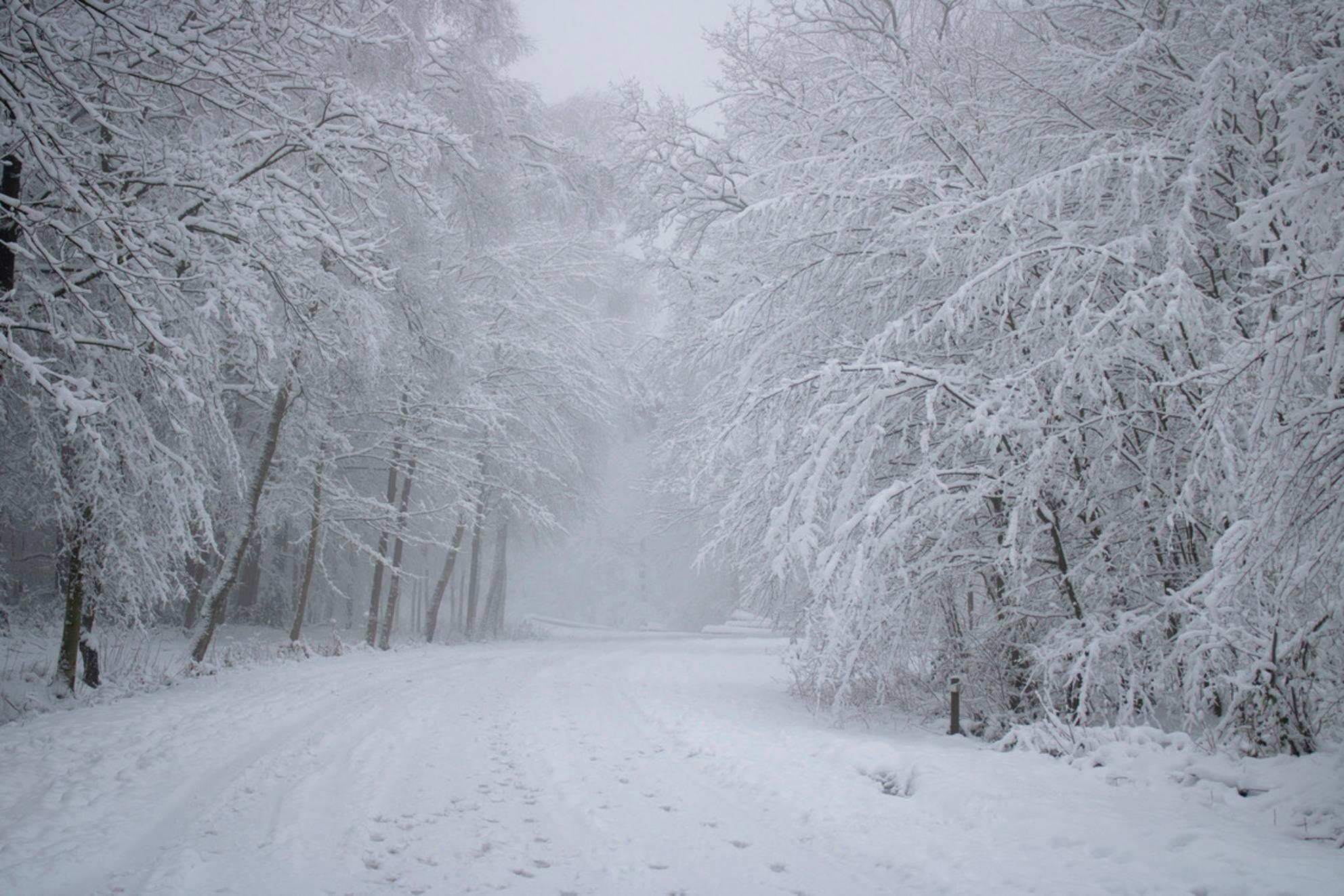 Winters Landschap - Vroege ochtend in het Vijlenerbos, genietend van een magisch winterlandschap. - foto door Carla34 op 27-01-2021 - deze foto bevat: boom, natuur, sneeuw, winter, landschap, mist, bos, nederland, vijlen, vijlenerbos, zuid-limburg, Vroege ochtend, winter wonderland