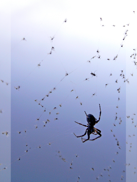 Hapjes - Deze spin was slim en spinde zijn web bij het water, nu heeft hij er profijt van! - foto door daniel44 op 15-04-2007 - deze foto bevat: water, spin, web, insect, vliegjes, daniel44