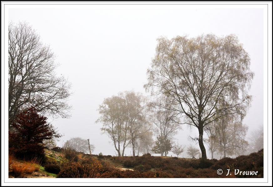 mistig Lage Vuursche - Het wachten was op een zonnestraal die helaas niet kwam - foto door janv2 op 06-12-2013 - deze foto bevat: herfst, mist, heide, hei, berken, Lage vuursche