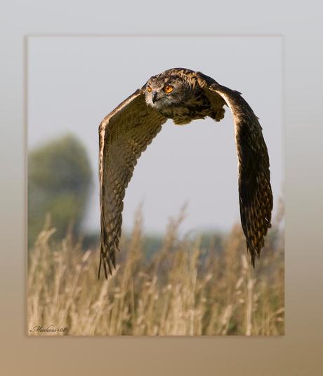 Vleugelslag