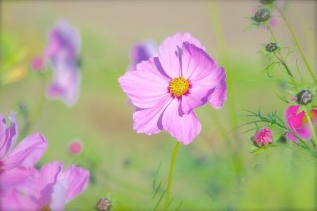 bloemen - vandaag op zoek gegaan naar paddestoelen, kwam ik deze bloemen tegen in de tuin van kasteel groeneveld in Baarn - foto door avdv_zoom op 28-10-2014 - deze foto bevat: bloem