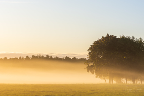 breda-tree-morning-sep2019-4