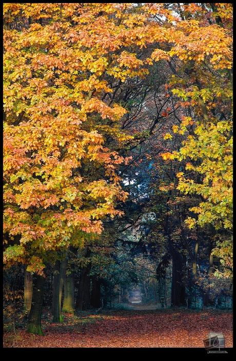 autumn @ maashorst