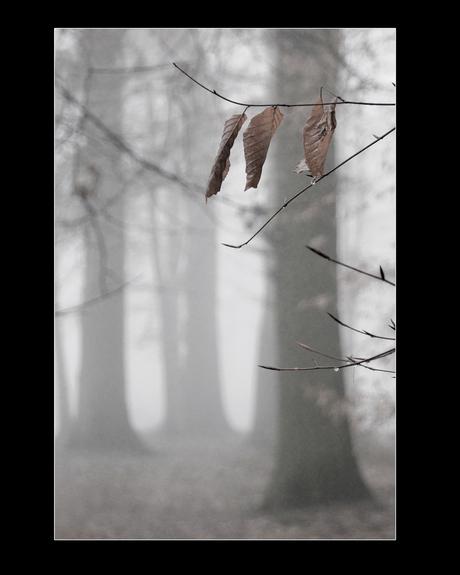 trio aan de boom
