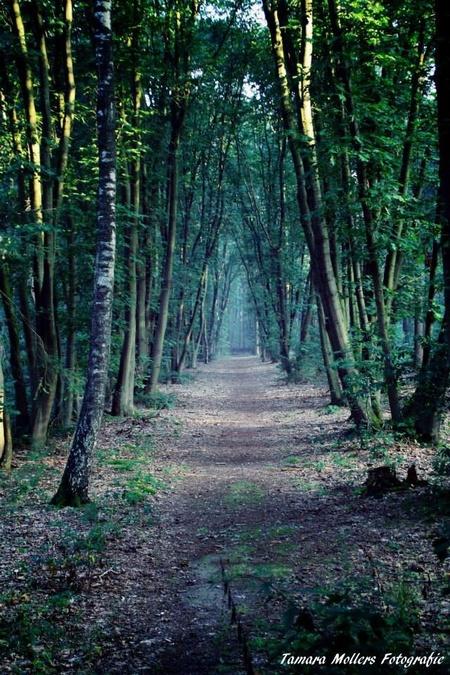 Lunters buurtbosch - - - foto door tamara23 op 30-11-2014 - deze foto bevat: boom, licht, bos, lunteren