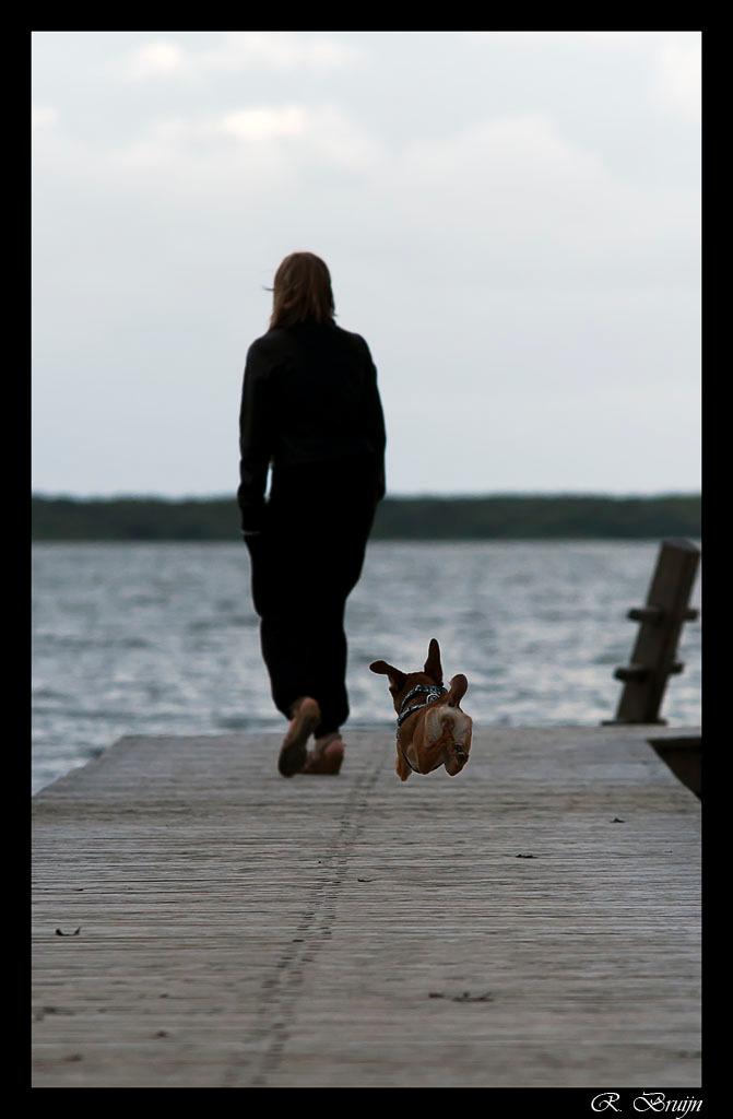 Dog airlines - Gypsy de hond van mijn dochter rent/vliegt over de steiger - foto door druide10 op 25-07-2012 - deze foto bevat: strand, dieren, vliegen, hond, zomer, zweven
