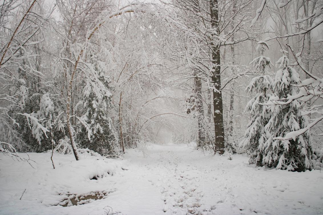 Hoe mooi de natuur is.. - Vroege ochtend in het besneeuwde Vijlenerbos, Vijlen, Zuid-Limburg. 25 Januari 2021. - foto door Carla34 op 01-02-2021 - deze foto bevat: boom, natuur, ochtend, sneeuw, winter, landschap, bos, nederland, vijlen, vijlenerbos, zuid-limburg, winter wonderland