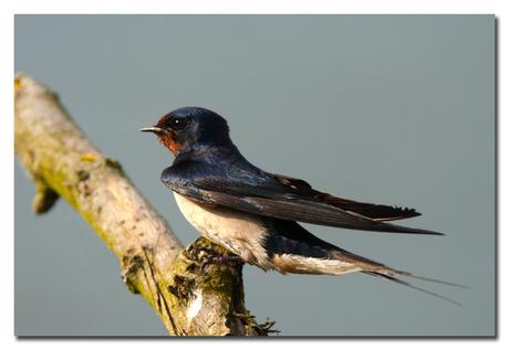 Eén zwaluw maakt nog geen zomer!