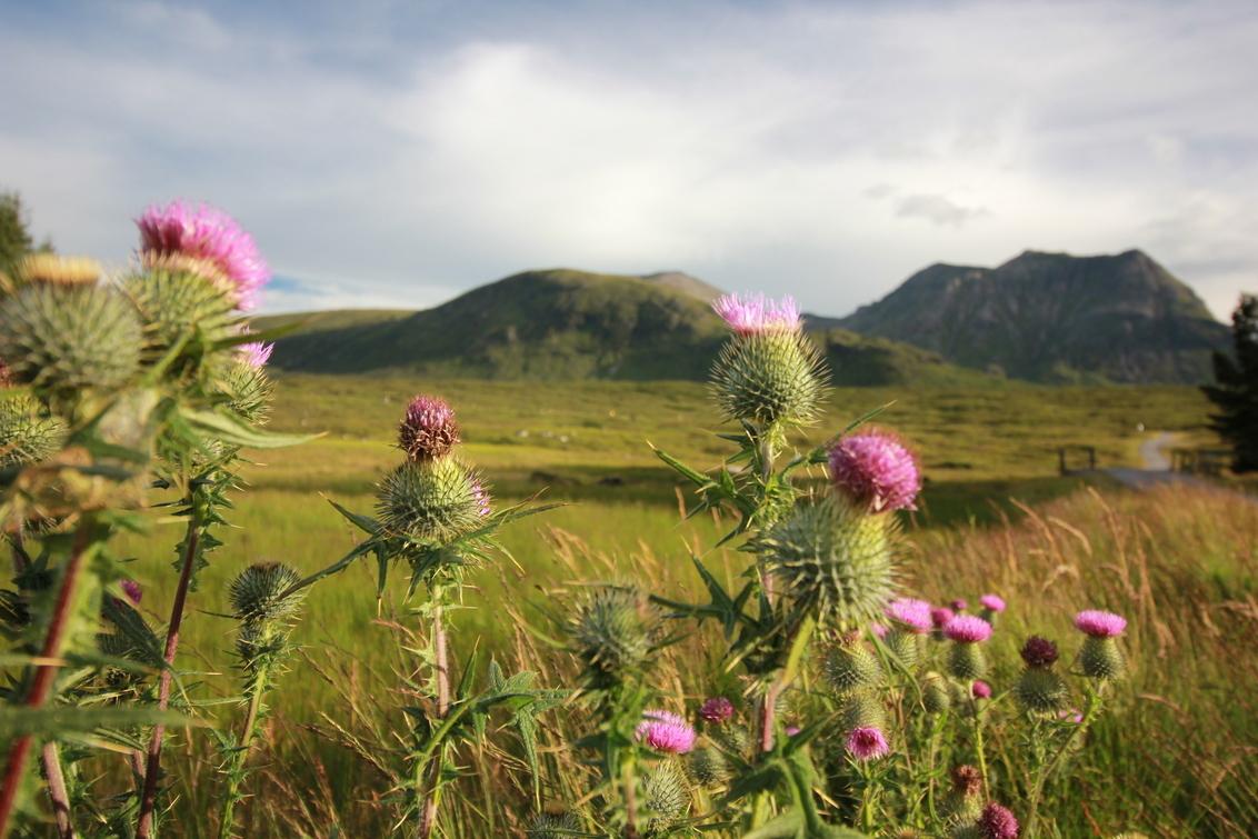 Flower of Scotland - Glencoe Schotland   Kingshouse Hotel   28 jul 2016 - foto door raymondheuts69 op 21-08-2016 - deze foto bevat: lucht, wolken, landschap, bergen