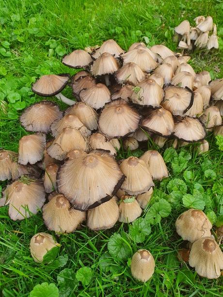 paddenstoelen in het park.