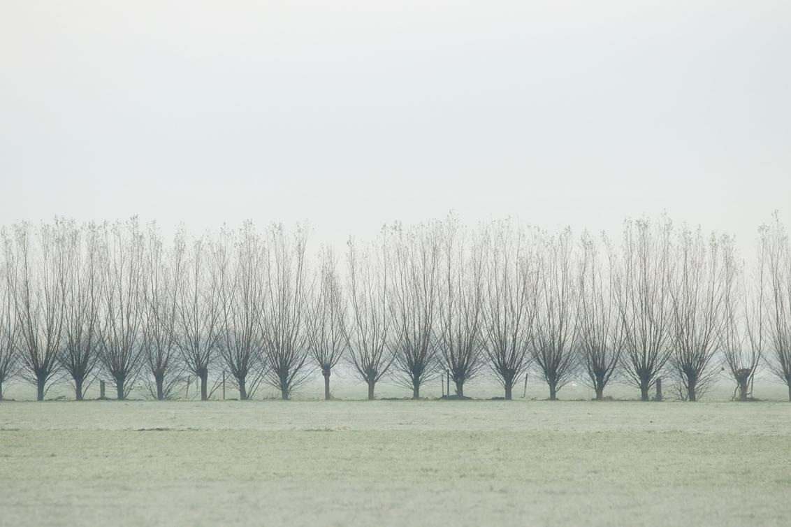 herhaling 2829 - - - foto door onne1954 op 06-12-2020 - deze foto bevat: groen, lucht, boom, natuur, licht, winter, blad, landschap, mist, nederland