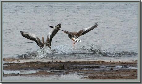 Vogelbroedplaats Cranendonck