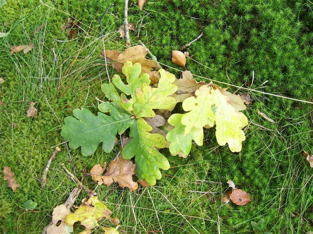 Bladeren - stille getuige van de naderende winter - foto door lentelies op 23-10-2005 - deze foto bevat: vallend