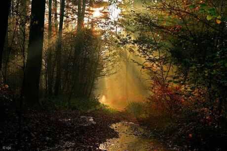 de weg naar het licht
