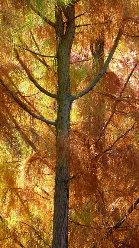 Herfst Botanische Tuin Utrecht
