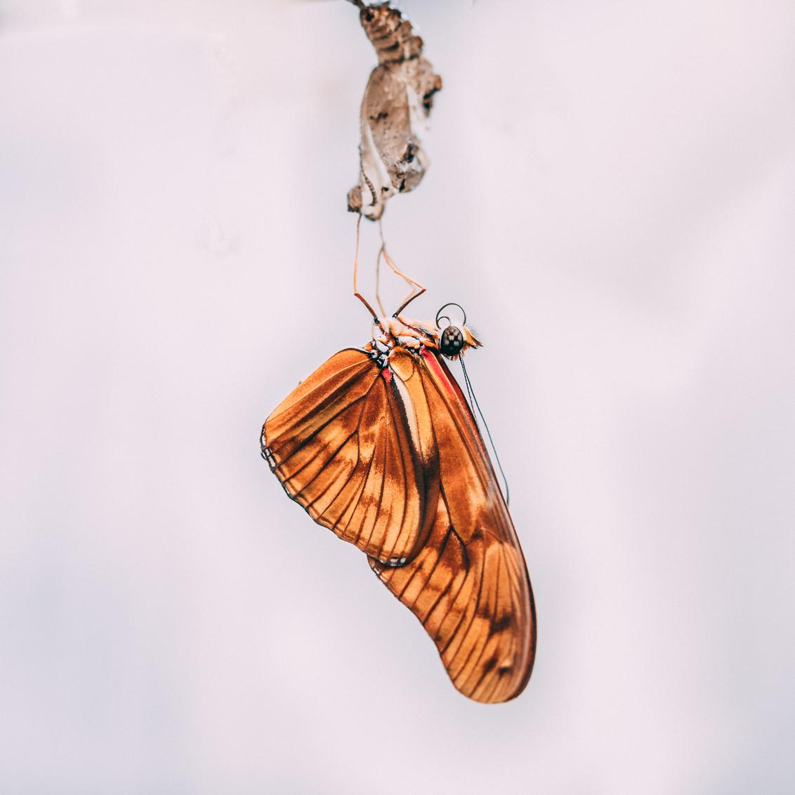 Just born - - - foto door niaravi op 08-02-2020 - deze foto bevat: groen, macro, zon, lente, natuur, vlinder, licht, oranje, herfst, tuin, rups, zomer, insect, vlindertuin, dof, bokeh