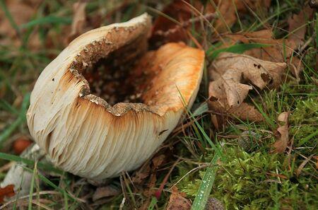 Een soepkom. - Een soepkom als titel maar is het niet helemaal want je kan er niet veel in houden...:P:P:P  Allen bedankt voor jullie reactie,s op de vorige...... - foto door jenny42 op 12-11-2016 - deze foto bevat: groen, natuur, vliegenzwam, paddestoel, herfst, blad, nederland, koekange, jenny42.