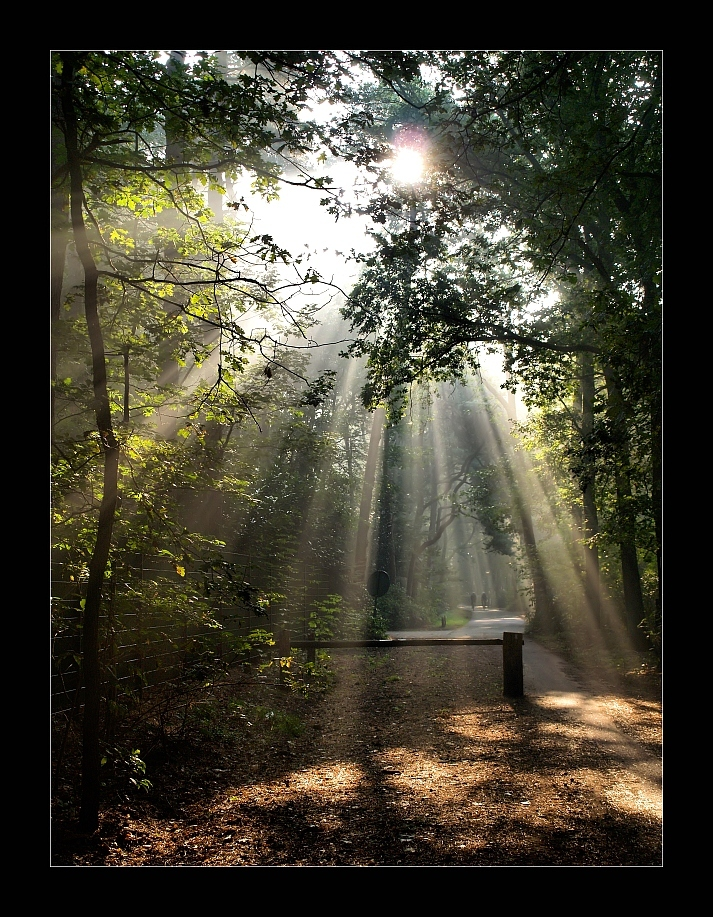 """Toen was er licht (3) - De laatste uit de """"Toen was er licht"""" serie. Bij deze heb ik erg getwijfeld. Het licht is hier heel mooi (ook het groen van de bladeren), maar de fot - foto door juriheise op 01-10-2009 - deze foto bevat: mist, oisterwijk, zonlicht, fietsen, mountainbike, schijnwerper"""