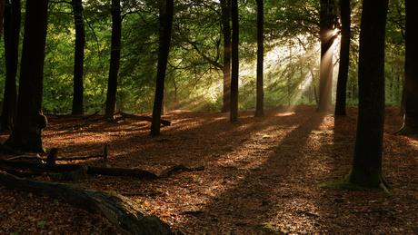 Het bos