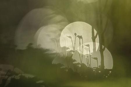 Boomsnavelmos - Dit mosje groeide op een boomstronk en door gebruik te maken van druppels in de achtergrond kon ik dit effect krijgen. - foto door NelTalen op 15-11-2015 - deze foto bevat: natuur, druppel, mos, dof, bokeh