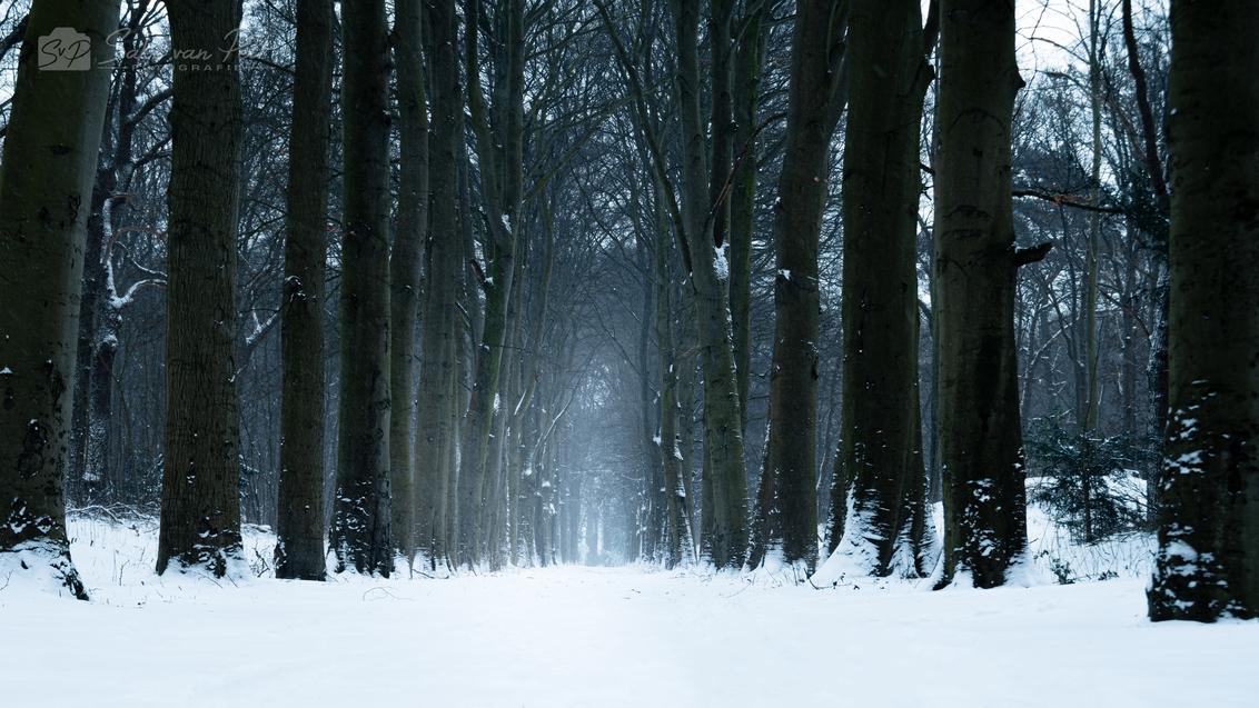 Sneeuwlaan - Lanen zijn fantastisch om een gevoel van diepte te krijgen. Een sneeuwstorm geeft nog een klein beetje extra lading. - foto door Sake-van-Pelt op 11-02-2021 - deze foto bevat: lucht, wolken, boom, water, natuur, licht, sneeuw, winter, lijnen, ijs, landschap, mist, bos, beukenlaan, koud, beuk, nederland, kou, diepte, laan, horsten, sneeuwstorm, beuken