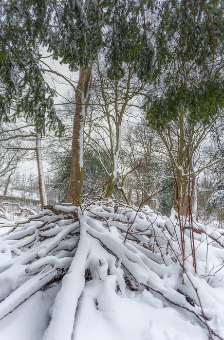 Winterroots