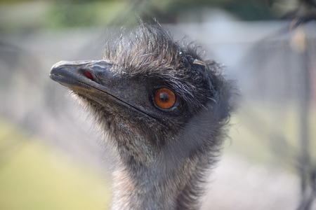 Nieuwsgierig Aagje - Emoe - foto door 1Herdershond op 14-04-2019 - deze foto bevat: dierentuin, natuur, vogels, park, emoe, Grote vogels, landvogels
