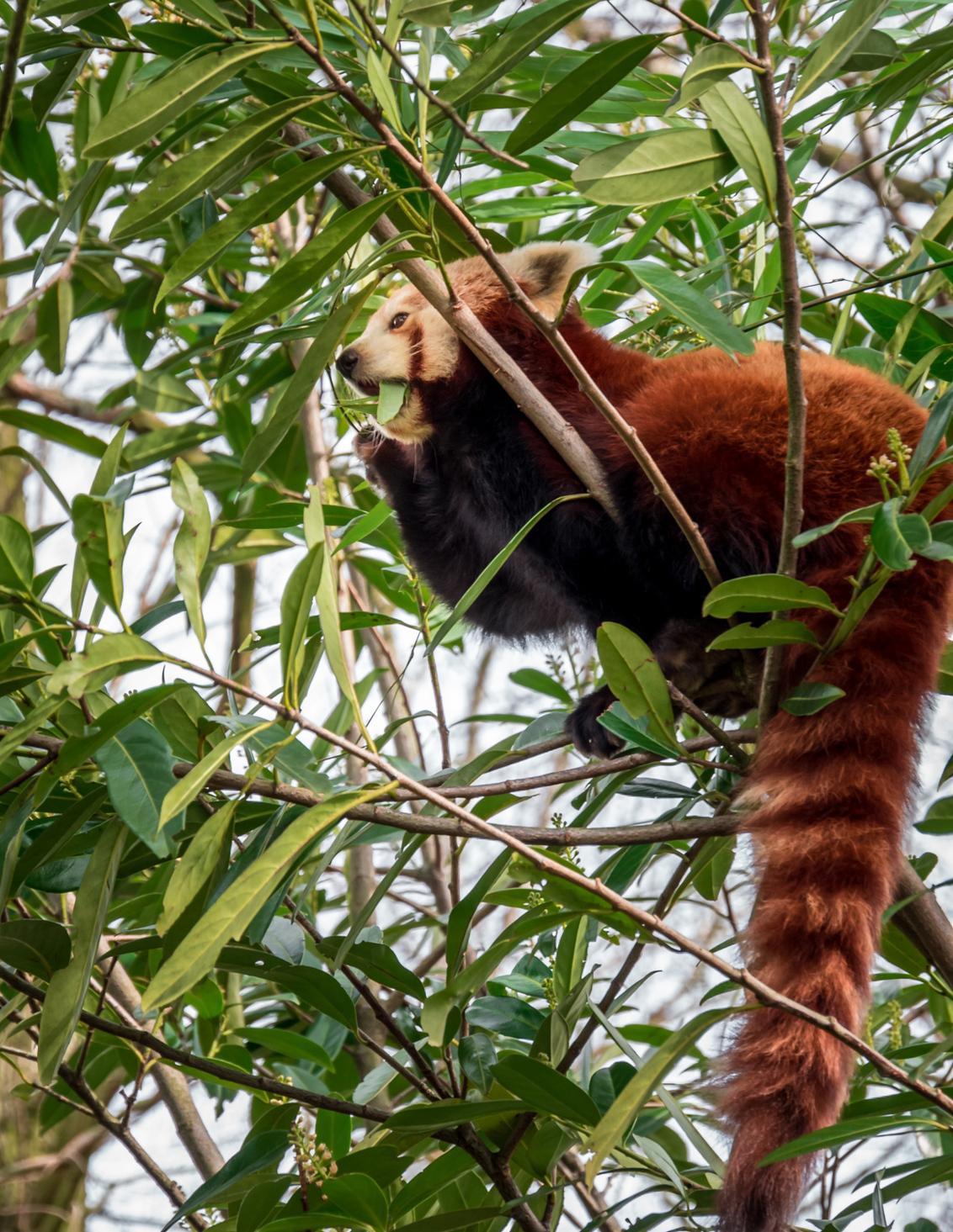 Blijdorp 3 - - - foto door MigiloDiPilo op 13-03-2016 - deze foto bevat: dierentuin, dieren, blijdorp