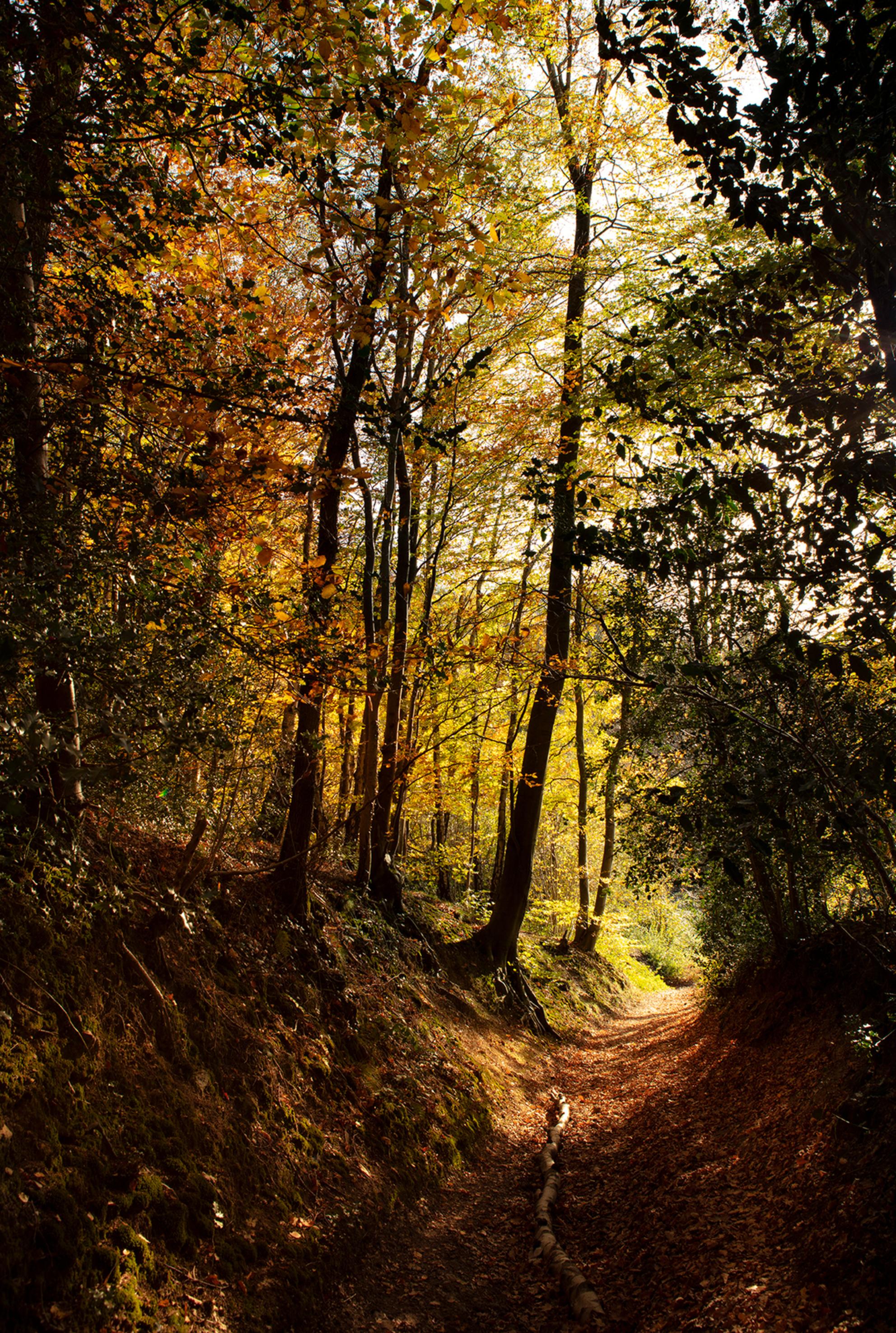 VIJLENERBOS14 - Vijlenerbos holleweg Zuid-Limburg - foto door TonGeers op 16-11-2020 - deze foto bevat: natuur, herfst, bos, bomen, vijlenerbos, zuid-limburg - Deze foto mag gebruikt worden in een Zoom.nl publicatie