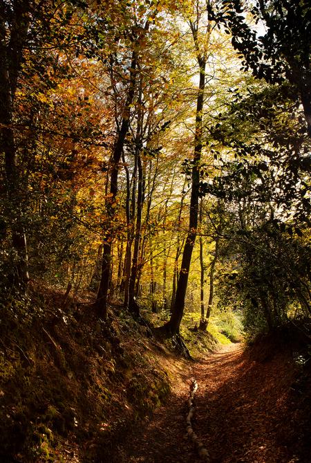 VIJLENERBOS14 - Vijlenerbos holleweg Zuid-Limburg - foto door TonGeers op 16-11-2020 - deze foto bevat: natuur, herfst, bos, bomen, vijlenerbos, zuid-limburg