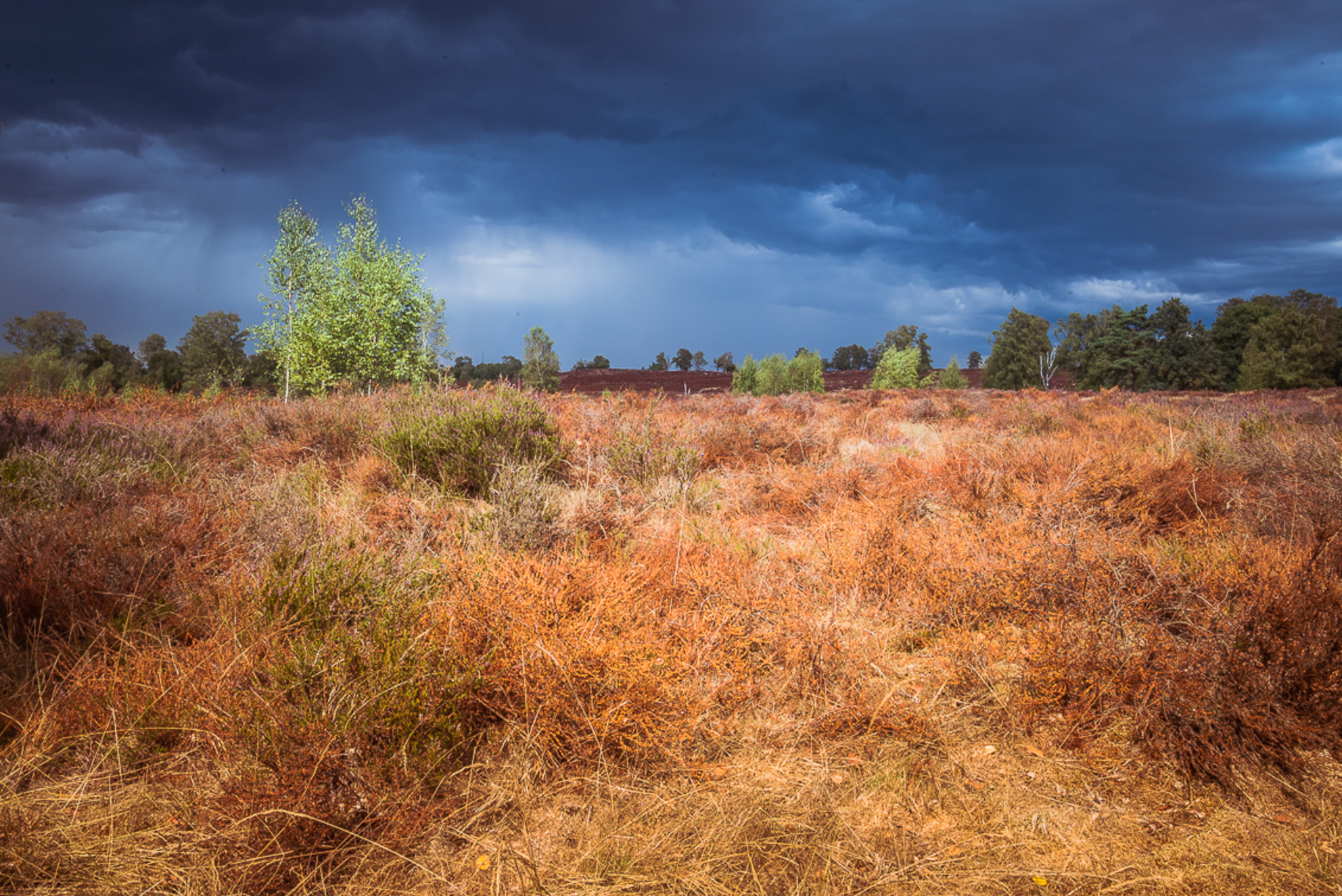 Regen op komst - Regenachtig weer heeft ook z'n voordelen..... - foto door RBvandaag op 25-08-2018 - deze foto bevat: lucht, wolken, natuur, licht, landschap, heide - Deze foto mag gebruikt worden in een Zoom.nl publicatie
