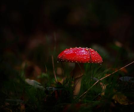 In de regen. - Glimmend van een miezerig buitje. - foto door hanshoeben51 op 22-10-2020