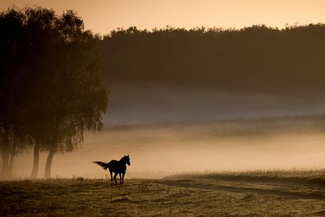 Profiel in de mist.