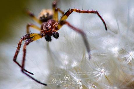 hello little spider