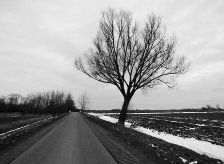 De weg - Boom langs de weg in Baflo. - foto door Mirandalahuis op 04-03-2021 - deze foto bevat: donker, sneeuw, winter, landschap, bomen, koud, weg, wegen, mysterie, boompje, weggetje, zwart wit, zwart wit landschap, zwart wit boom