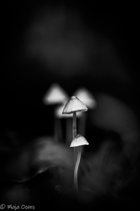 Shine... - Soms heb je van die foto's dat je denkt wat moet ik er mee? Eigenlijk net iets te hard licht, compo net niet helemaal ok, en toch te rommelig op de f - foto door mb83 op 02-09-2018 - deze foto bevat: natuur, licht, paddenstoel, bewerkt, bewerking, zwartwit, contrast, creatief, lightroom