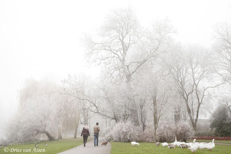Beetje winter 2-12-2017